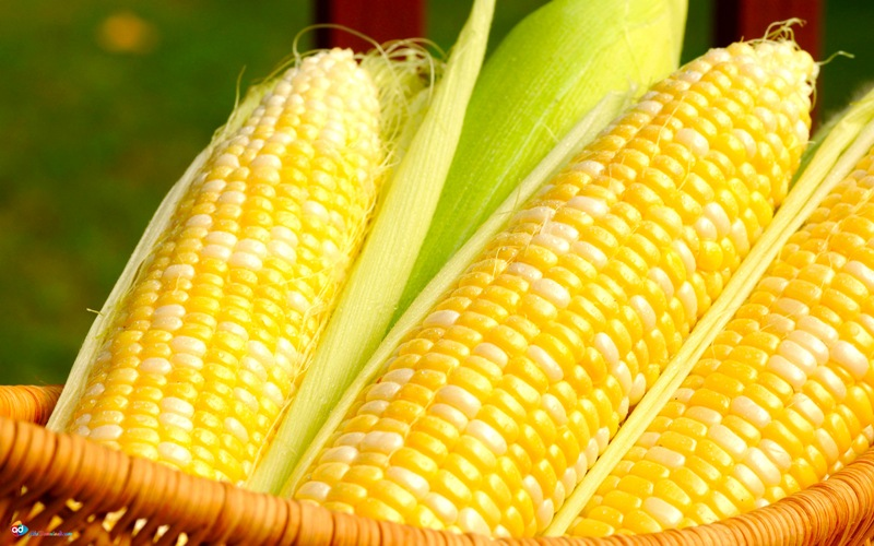 di-L9I6 مصرف این ماده غذایی موجب حفظ سلامت استخوان بانوان میشود