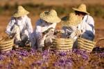 Saffronfarm 860808